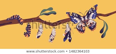 Vlinder rups natuur illustratie hemel landschap Stockfoto © colematt