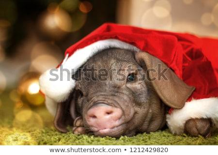 Сток-фото: с · Новым · годом · открытки · рождество · символ · текста