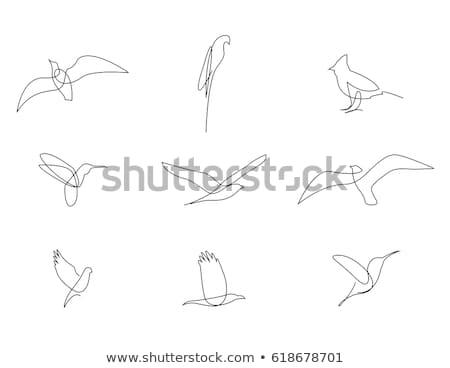 Simple bird designs set Stock photo © Tawng