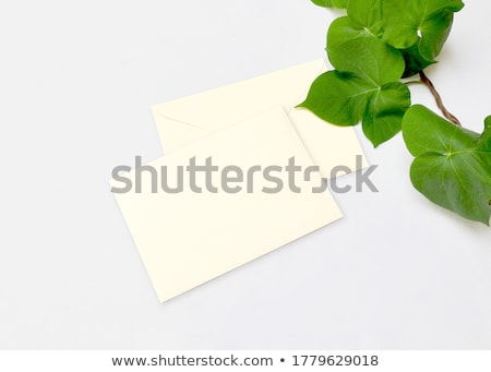 Blank envelope and green leaves in nature, paper card as background, correspondence and newsletter Stock photo © Anneleven