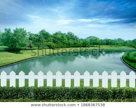 болото трава синий забор бежевый пурпурный Сток-фото © bobkeenan