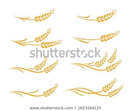 Bira tahıl cam tablo grup içmek Stok fotoğraf © inaquim