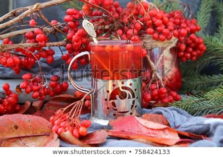 赤 · 液果類 · 支店 · 葉 · 孤立した · 白 - ストックフォト © vtorous