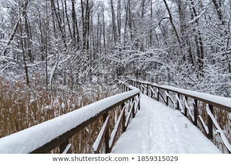 śniegu · drzew · lasu · słoneczny · zimą - zdjęcia stock © chesterf