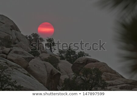 boom · warm · heldere · licht · natuur · landschap - stockfoto © meinzahn