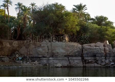 крокодила берега большой воды зубов кожи Сток-фото © OleksandrO