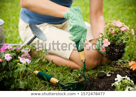 Bedding plants and flowers Stock photo © speedfighter