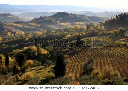 şaşırtıcı · Toskana · manzara · gündoğumu · İtalya · ağaç - stok fotoğraf © meinzahn