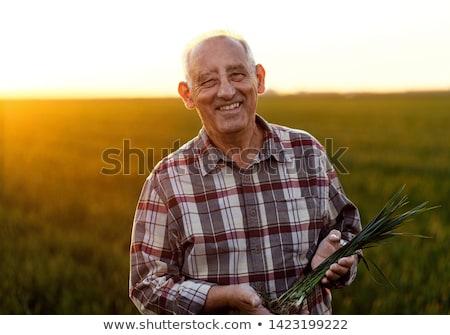 âgées agriculteur blé cultures domaine Photo stock © stevanovicigor