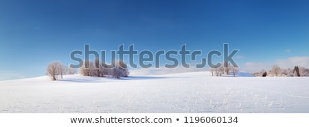 заморожены зима области травой поле лес лист Сток-фото © justinb