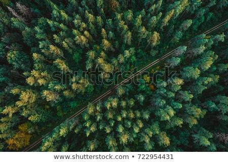 út sötét zöld erdő nap idő Stock fotó © Xantana
