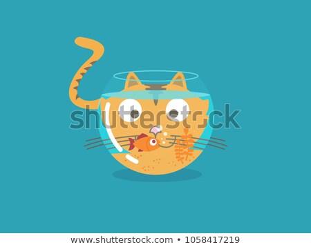 cat play fish aquarium stock photo © lenm