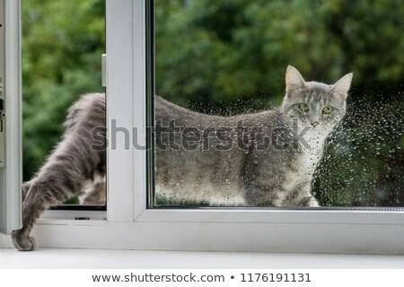 Cat Walk Ledge Building Stock photo © lenm