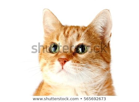 Close up of kittens? faces Stock photo © IS2
