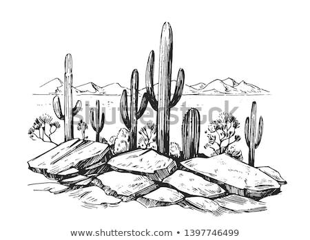 puesta · de · sol · desierto · ilustración · vista · palmera · cielo - foto stock © bluering
