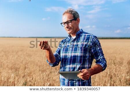 Férfi öreg telefon búzamező étel telefon Stock fotó © IS2
