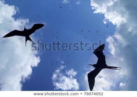 Pássaro silhueta backlight criação temporada céu Foto stock © lunamarina