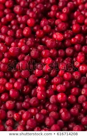 Cowberry background Stock photo © pashabo