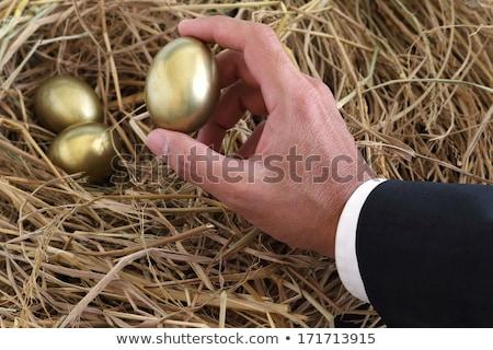 businessman protecting golden egg on nest stock photo © andreypopov