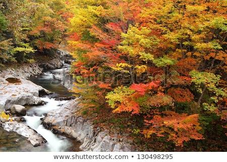 Nakatsugawa Fukushima Autumn Stock photo © vichie81