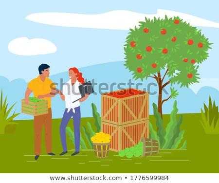 Szőlőszüret almák konténer helyi gyümölcs vektor Stock fotó © robuart