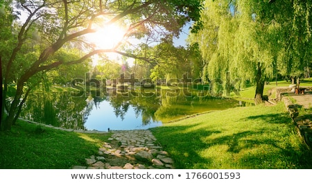 Pond in foreground of park in nature Stock photo © bluering