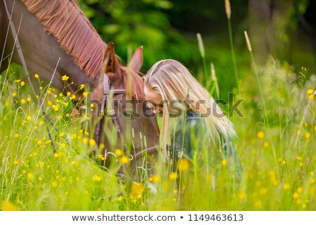 A white horse on yellow flower field with a rider. Stock photo © Lopolo