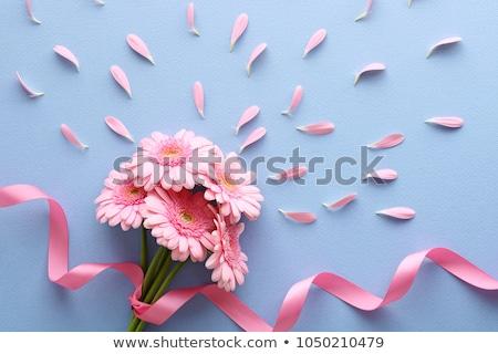 Valentines day gift box and gerbera flower Stock photo © karandaev