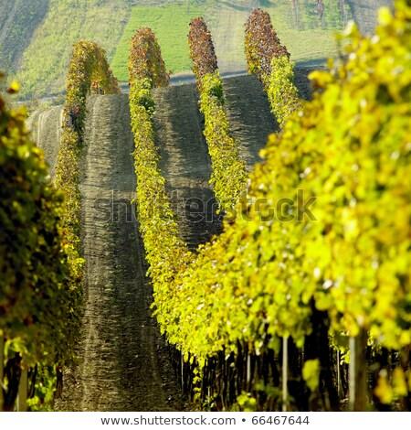 Bölge Çek Cumhuriyeti manzara bitkiler düşmek tarım Stok fotoğraf © phbcz