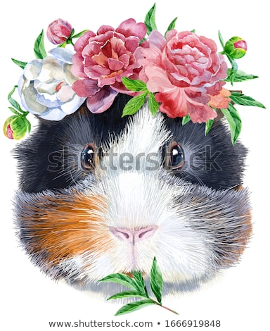 Watercolor portrait of Abyssinian guinea pig with flowers on white background Stock photo © Natalia_1947