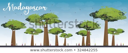 Madagascar skyline silhouette with baobabs with green foliage Stock photo © ShustrikS