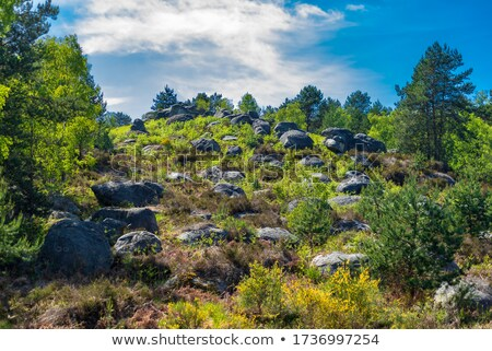 The forest of Fontainebleau Stock photo © RazvanPhotography