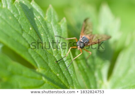 fly flap detail Stock photo © prill