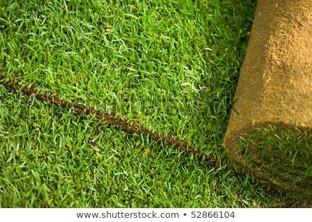 Turf grass rolls closeup stock photo © lightkeeper