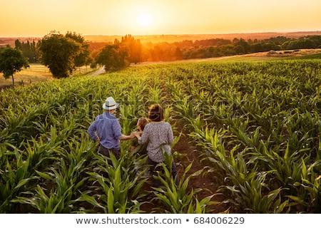 rolnik · siano · człowiek · niebieski · biały · uśmiechnięty - zdjęcia stock © photography33