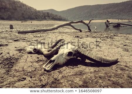 rachado · terra · grama · mudança · climática · aquecimento · global · textura - foto stock © stoonn