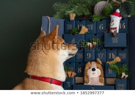 Köpek oyuncaklar Noel kırmızı mutlu eğlence Stok fotoğraf © luapvision