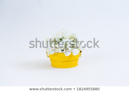 White wildflowers in a pink flowerpot Stock photo © Julietphotography
