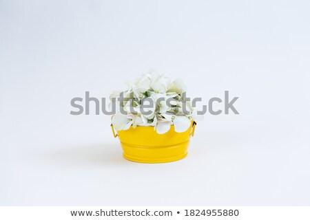 букет · Полевые · цветы · Ромашки · цветок · бумаги - Сток-фото © julietphotography