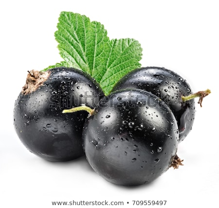 Stock photo: isolated blackcurrant