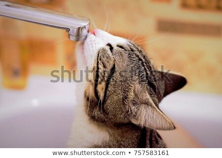 very thirsty stock photo © lithian