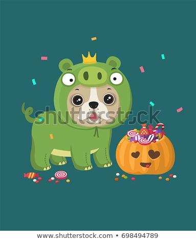 犬 カボチャ スーツ ルックス 準備 ハロウィン ストックフォト © LynneAlbright