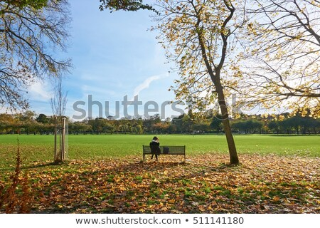 美しい 秋 公園 スコットランド ツリー 太陽 ストックフォト © Julietphotography
