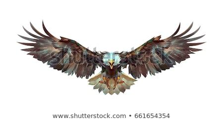 Eagle Flying Wings Design stock photo © chromaco