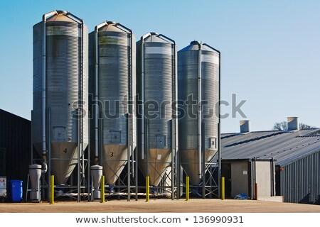 baromfi · farm · fotó · csőr · gabona · tenyésztés - stock fotó © xedos45