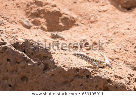 lagarto · árvore · olho · natureza · pele - foto stock © chris2766