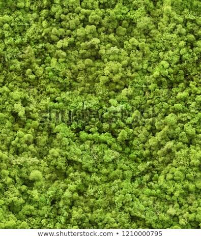 Yosun doku yeşil soyut alan Stok fotoğraf © tashatuvango