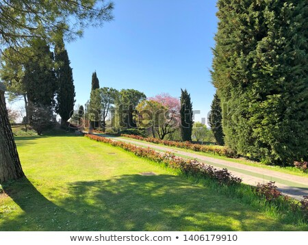 árvore verde prado parque Itália grande Foto stock © rglinsky77