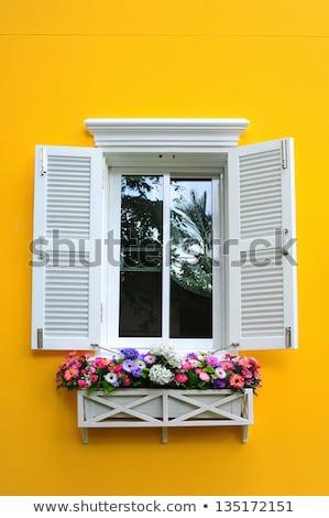 çiçek pencere görüntü yaprak güzellik yaz Stok fotoğraf © Kirschner