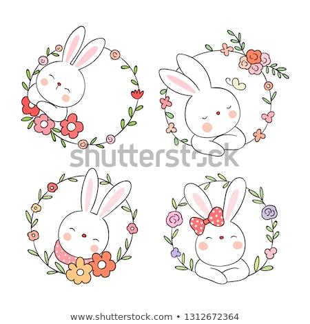 Adorável coelho imagem cauteloso cinza rabino Foto stock © pressmaster